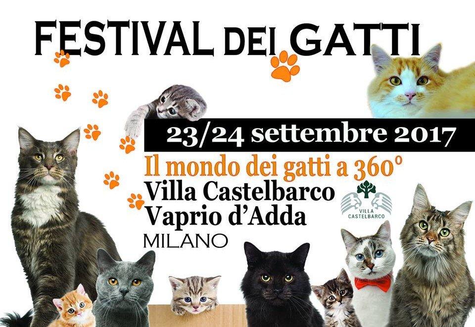 festival gatti