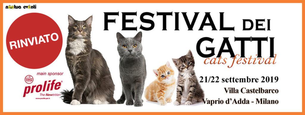 organizzazione mostre festival gatti